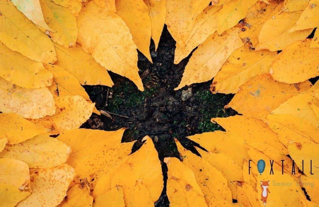 Yellow Fall Leaves in a pile